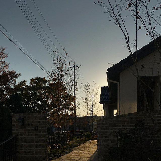 #アオダモ #ジューンベリー #エゴノキ 日暮れが早くなりました。#ts_niwa