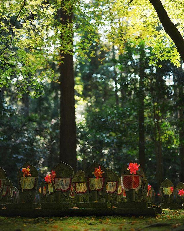 #お地蔵さん #ガーデン#ガーデニング#ナチュラルガーデン#ナチュラルガーデニング#緑のある暮らし#グリーンのある暮らし#グリーンガーデン#雑木#雑木の庭#garden#gardening#gardenlove#instagarden#instagardenlovers#instagardening#instagardeners#gardensheds#niwa#庭#ティーズガーデンスクール#フォトコミュ#フォトブートキャンプ